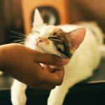 Zooplus: Gutschein online einlösen – So funktioniert's